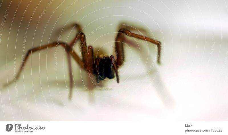Legs Fear Disgust Panic Spider Hideous Crawl Frightening Hunter Whisker Tepid Flee Nursery web spider
