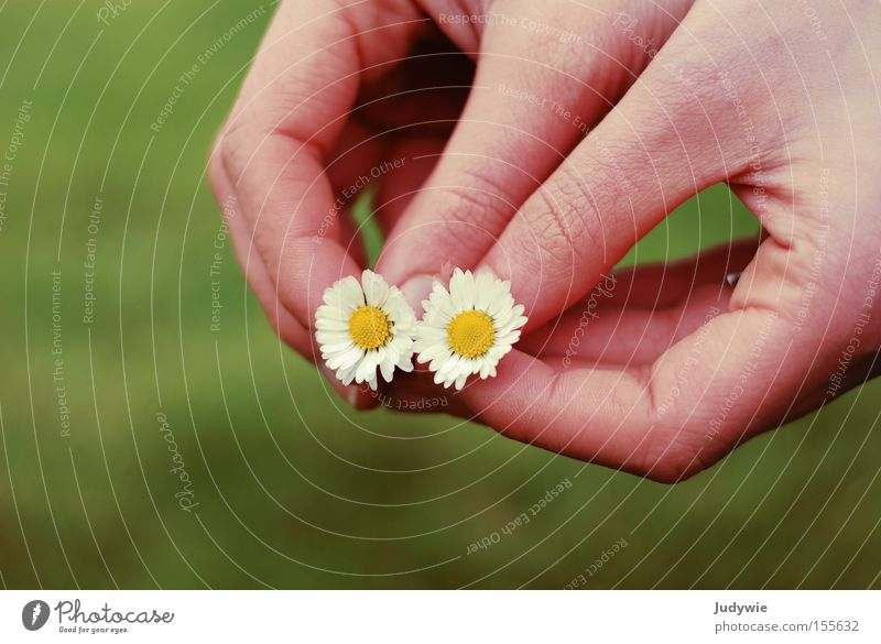 Woman Nature Hand Green Summer Flower Yellow Meadow Emotions 2 Together Pink In pairs Society Daisy