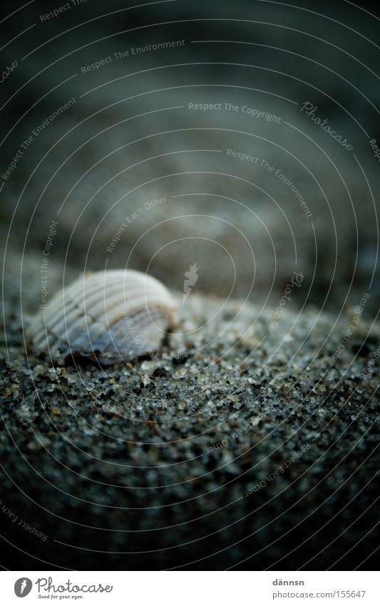 Ocean Beach Dark Stone Waves Baltic Sea Mussel Hissing Mecklenburg-Western Pomerania Darss Ahrenshoop