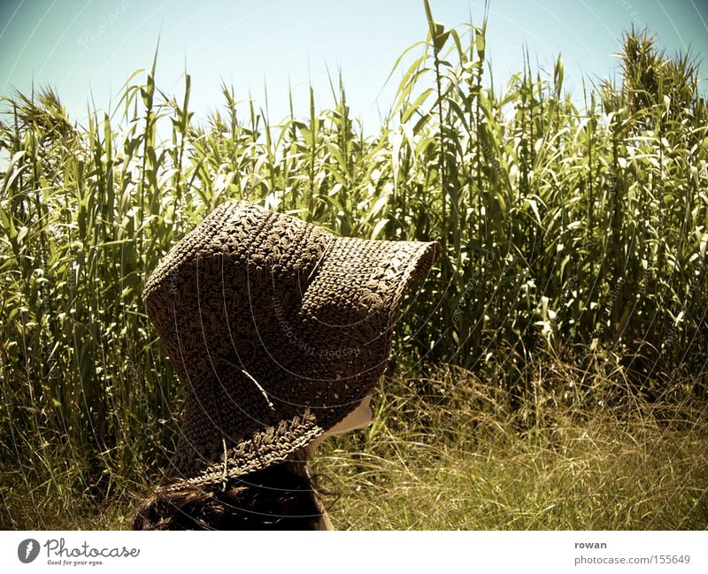 Sun Summer Calm Warmth To go for a walk Hat Agriculture Americas Field Rural Maize Grain Country life Sunhat Maize field