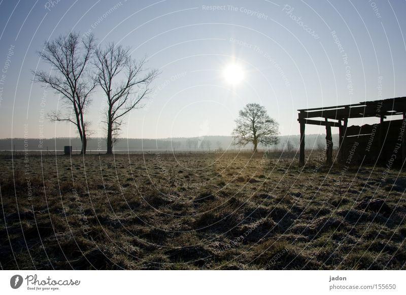 meadow Meadow Pasture Tree Hut Barn Sun Back-light Brandenburg Winter Dusk Derelict Field Transience bonanza Agriculture