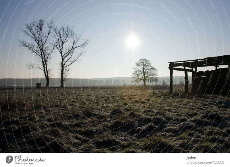 Tree Sun Winter Meadow Field Transience Derelict Agriculture Hut Pasture Dusk Barn Brandenburg