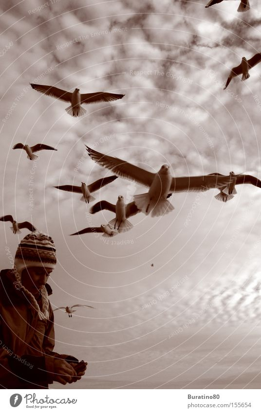 Attack of the seagulls Sky Free Winter Cold Seagull Human being Woman Gray Clouds Near Bird Snapshot