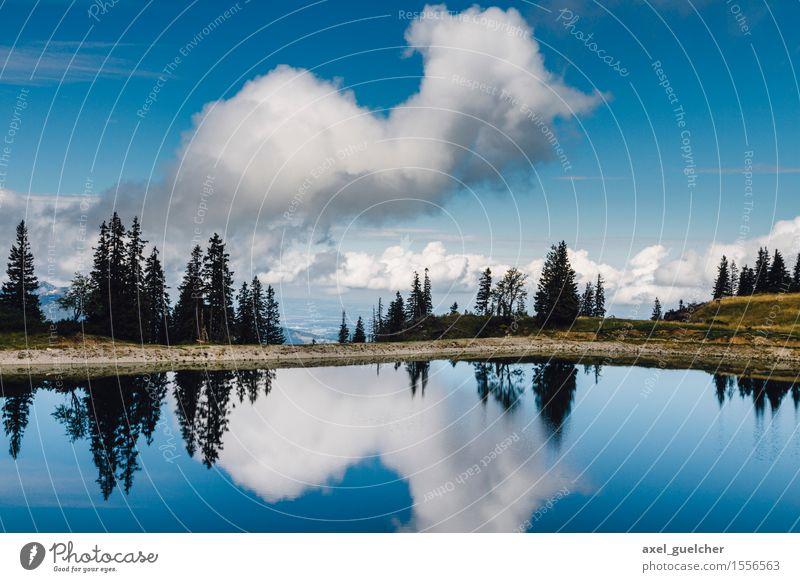 So Blue Nature Landscape Water Sky Clouds Summer Beautiful weather Tree Lakeside Joy Happy Contentment Joie de vivre (Vitality) Optimism Power Willpower Life