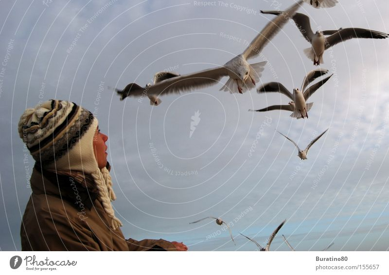 Woman Sky Winter Cold Freedom Bird Fear Elegant Aviation Contact Cap Seagull Attack Human being Nosedive