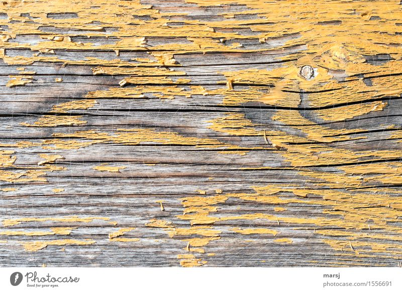 too late Dye Yellow Wood grain Background picture Old Hideous Change Crack & Rip & Tear deceased Patina Knothole weathered Decline Colour photo Subdued colour