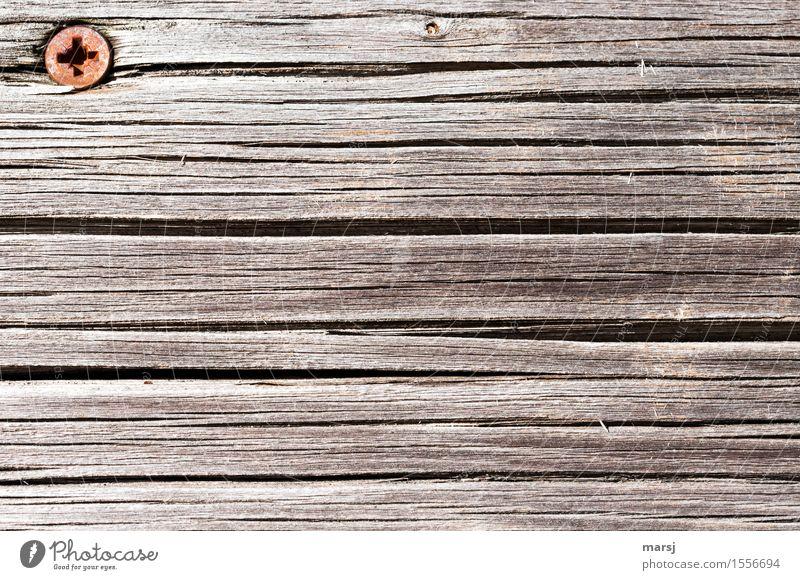 Grate head in corner Wooden board screw head Screw Steel Rust Old Cross-head screw Wood grain Weathered Length Colour photo Subdued colour Exterior shot