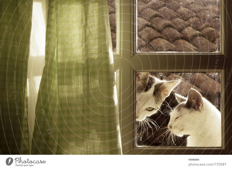Window Cat Together Pair of animals Curiosity Farm Drape Double exposure Pet Mammal Domestic cat Rural Kitten Country life View from a window
