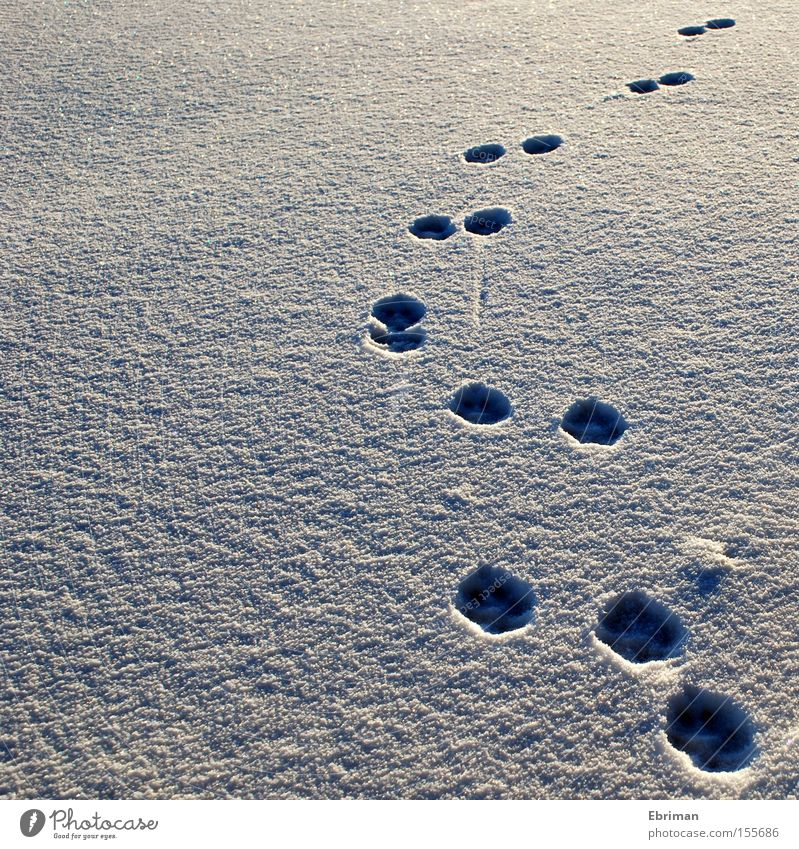 up and away Tracks Paw Footprint Dog Snow Cold Winter White Loneliness Nature Wild animal Ice Arch Lanes & trails Direction Mammal