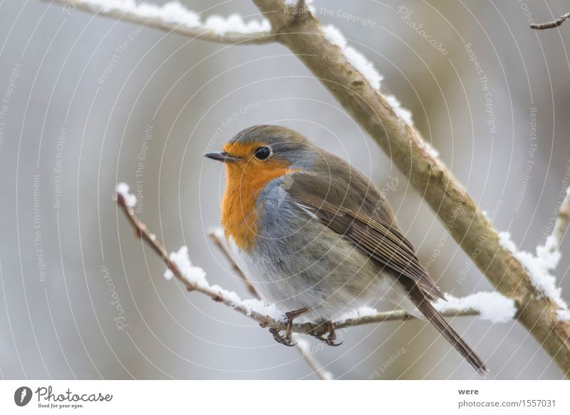 Nature Plant Animal Forest Bird Environmental protection Habitat Animal protection Robin redbreast