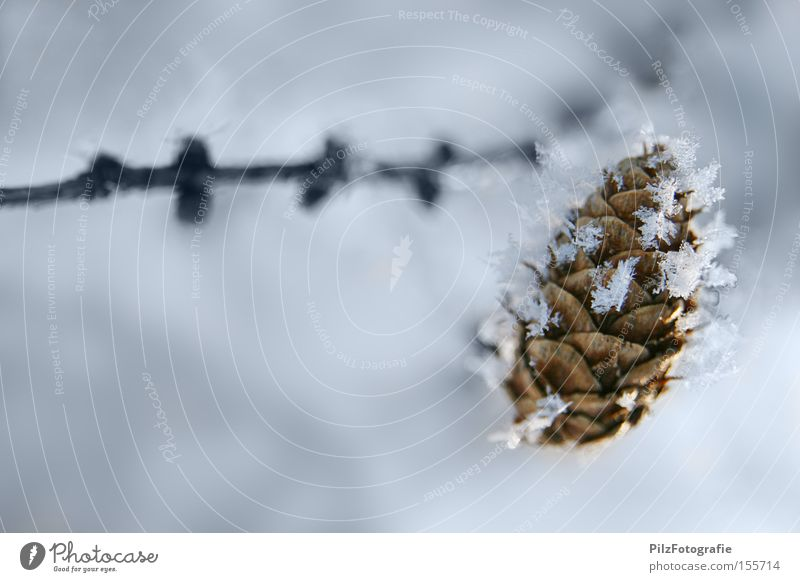 winter dream Ice Snow Winter Cone Tree Branch White Structures and shapes Frozen Cold Crystal structure Snowstorm Nature Coniferous trees Larch Larch cone