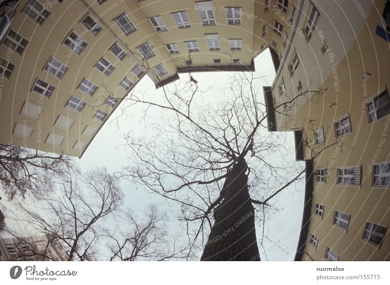 I look up Courtyard Town house (City: Block of flats) Window Tree Berlin Potsdam Tenant Sky Rent Backyard Winter Cold Dismissive Corner Stairs