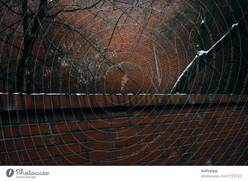 neighbouring garden Wall (barrier) Tree Branch Twig Neighbor Brick Snow Courtyard Seam Penitentiary Barrier Captured Nature Fear Shielded shield
