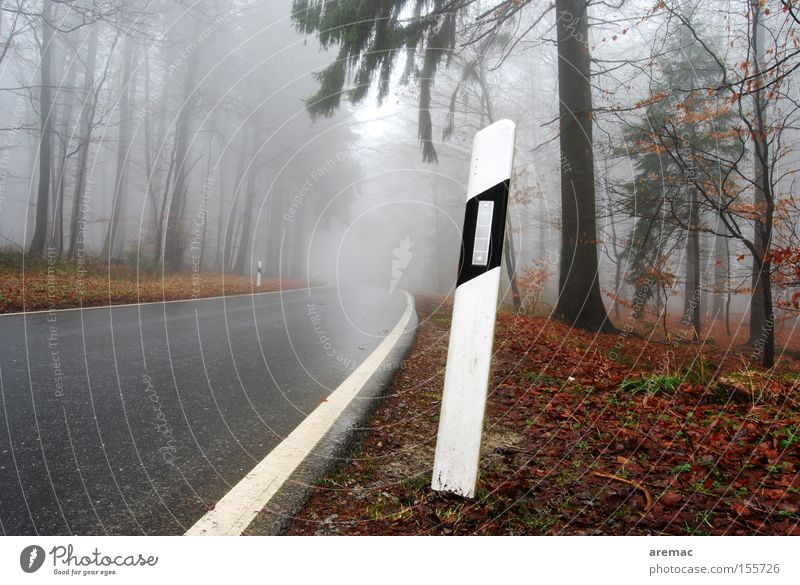 Tree Street Forest Autumn Rain Fog Wet Driving Traffic infrastructure Damp Road sign Street sign Signs and labeling Reflector post