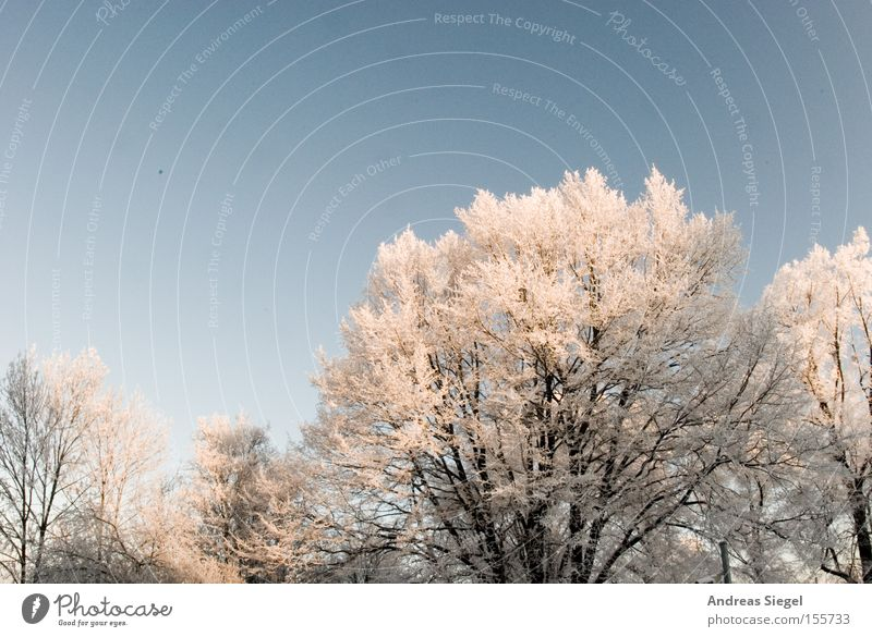 Cold DDoutdoors Winter Snow Ice Tree White Sky Blue Dresden Hoar frost Frost