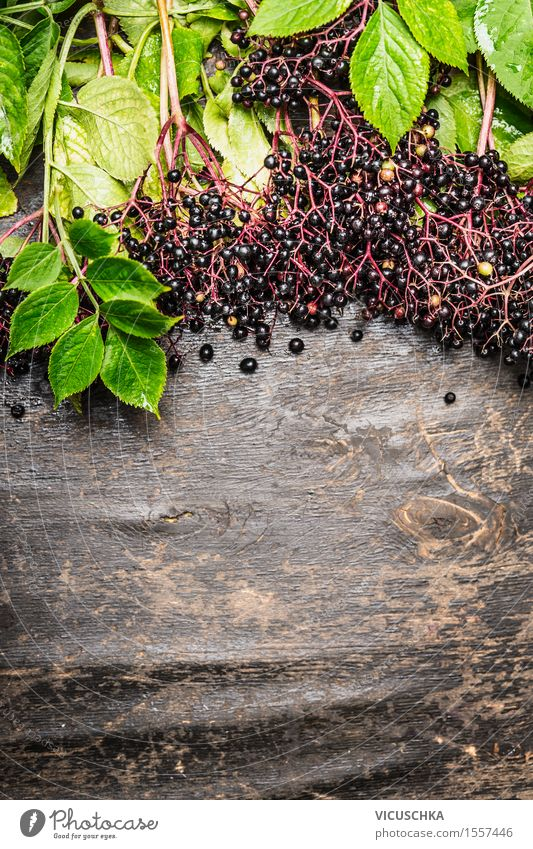 Ripe elderberries on twigs with leaves Food Fruit Nutrition Organic produce Style Alternative medicine Healthy Eating Life Summer Garden Table Nature Plant