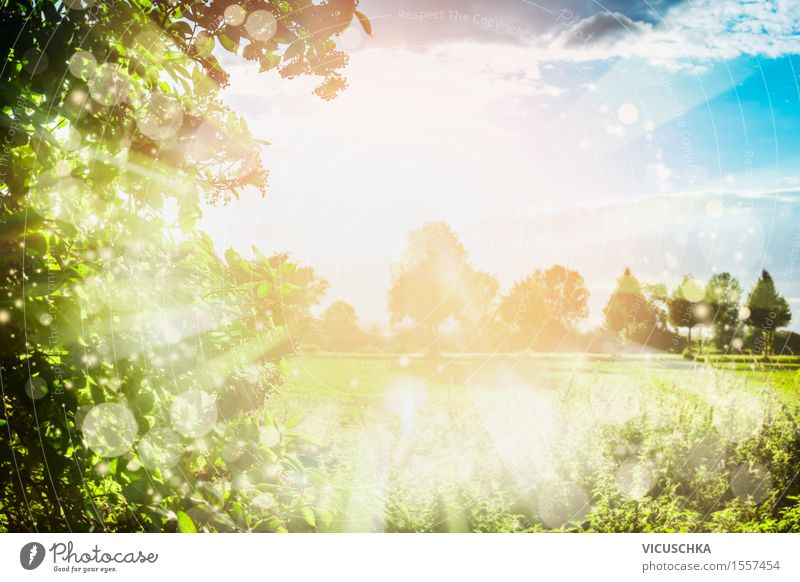 Summer nature background with sunbeams . Lifestyle Design Garden Nature Sky Sunlight Spring Beautiful weather Park Meadow Field Jump Style Background picture
