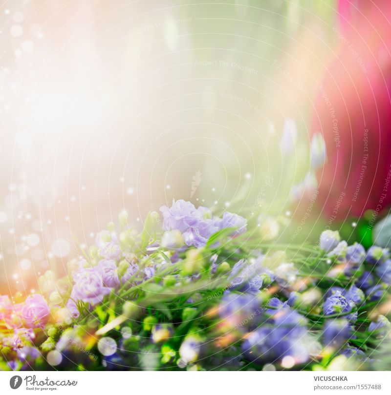 Nature background with small blue flowers Summer Landscape Plant Sunlight Spring Beautiful weather Flower Grass Leaf Blossom Garden Park Meadow Bouquet