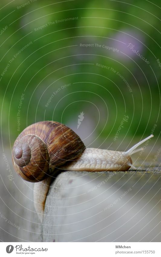 In the peace lies the strength Snail Snail shell Feeler Mucus Slimy Multicoloured Green Stone Stairs Stone steps Edge Slowly Summer without agitation