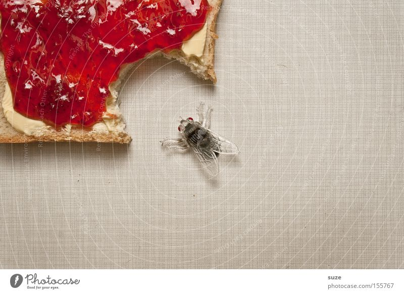 Funny Food Fly Nutrition Decoration Sweet Creativity Idea Insect Breakfast Delicious Bread Organic produce Fasting Bite Vegetarian diet