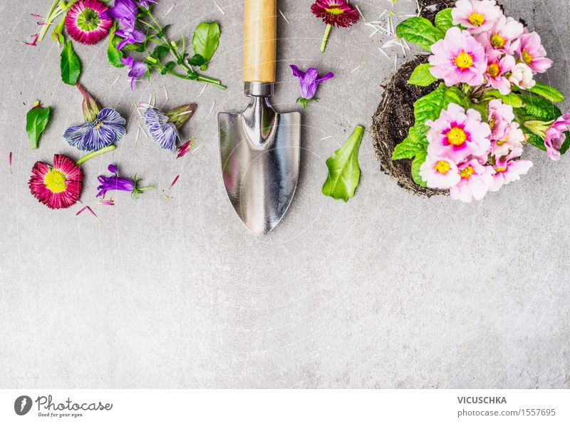 Gardening with flowers and shovel Style Design Leisure and hobbies Summer Table Nature Plant Flower Leaf Blossom Blossoming Yellow Shovel Pot plant