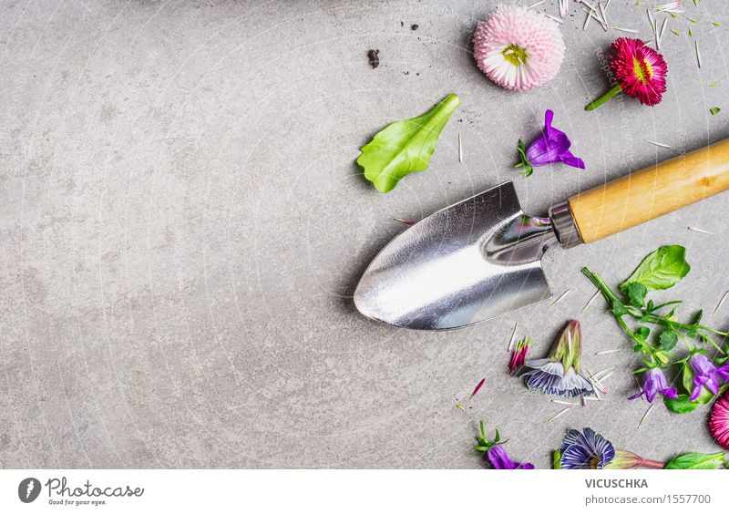 Hand shovel and garden flowers Style Design Leisure and hobbies Summer Garden Table Nature Plant Flower Leaf Blossom Blossoming Yellow Background picture