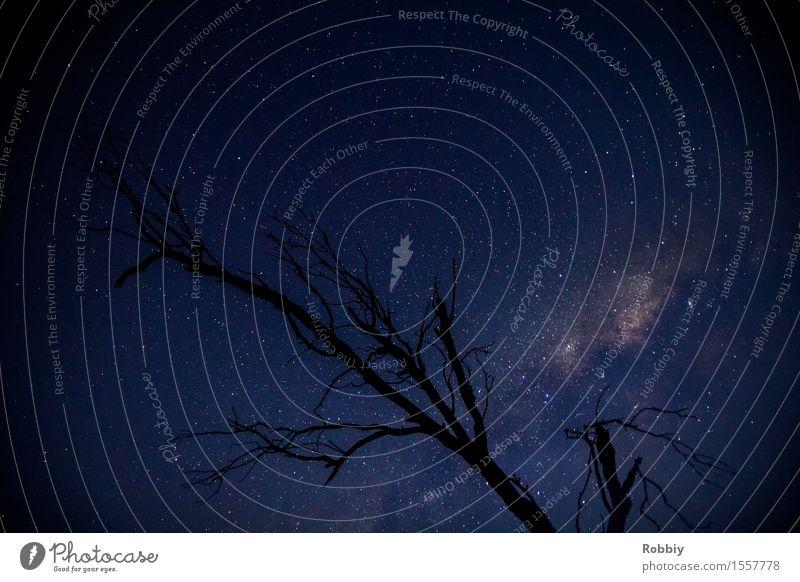 Sky Nature Vacation & Travel Blue Tree Far-off places Environment Religion and faith Horizon Dream Illuminate Beginning Uniqueness Stars Infinity Universe