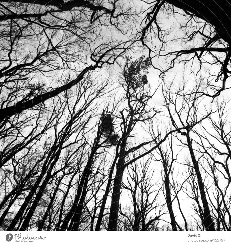 90° Forest Deciduous forest Tree trunk Branch Twig Skeleton Winter Leaf Sky Gloomy Wide angle Geometry Black & white photo Autumn orthochrome