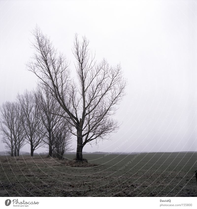 dreary Tree Pasture Meadow Winter December Gloomy Loneliness Cold Far-off places Fog Bad weather Transience yashica Sadness