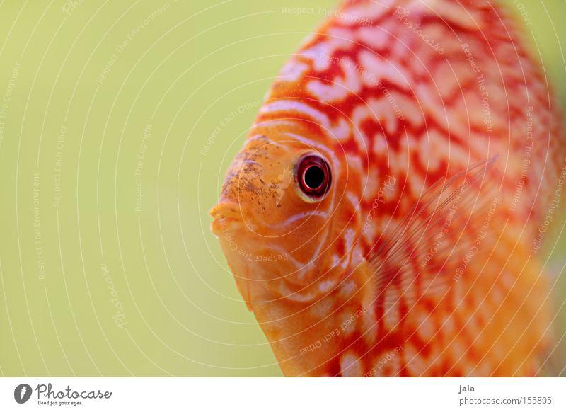 Water Ocean Fish Aquarium Animal Sea water Perches Discus fish Cichlids