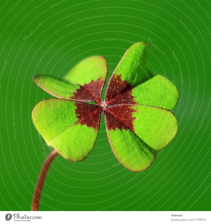 Green Joy Emotions Happy Feasts & Celebrations Success Clover Future Hope Sign Desire Salutation Birth Congratulations Good luck charm Macro (Extreme close-up)