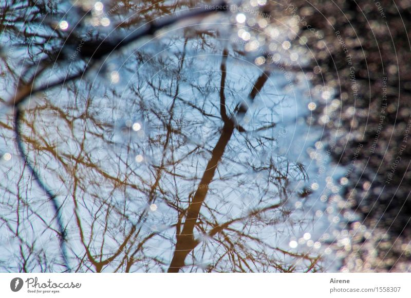 just looking on the ground again Nature Earth Water Sky Climate Weather Beautiful weather Tree Branch Puddle Glittering Esthetic Fluid Friendliness Wet Natural