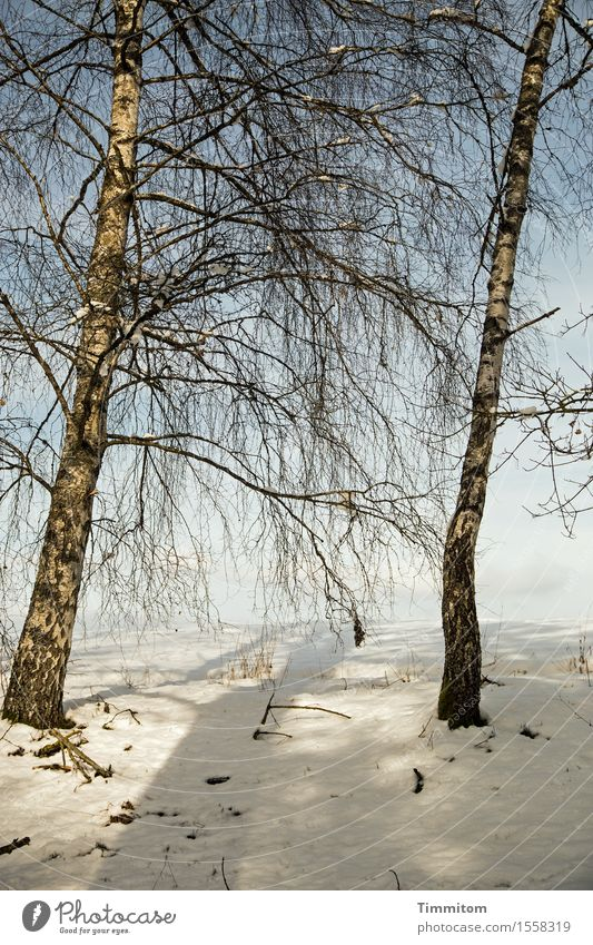 Soon again... Environment Nature Plant Sky Winter Bad weather Tree Birch tree Field Esthetic Natural Relaxation Snowscape Shadow Sun Colour photo Exterior shot