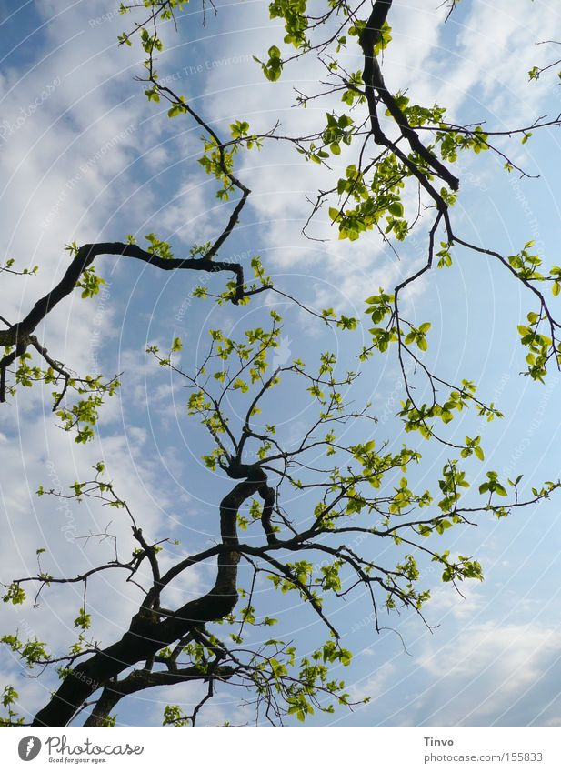 anticipation Branch Twig Leaf Shoot Spring Cheerful New start Anticipation Happiness Fresh Clarity Wake up Vacation & Travel View to the sky