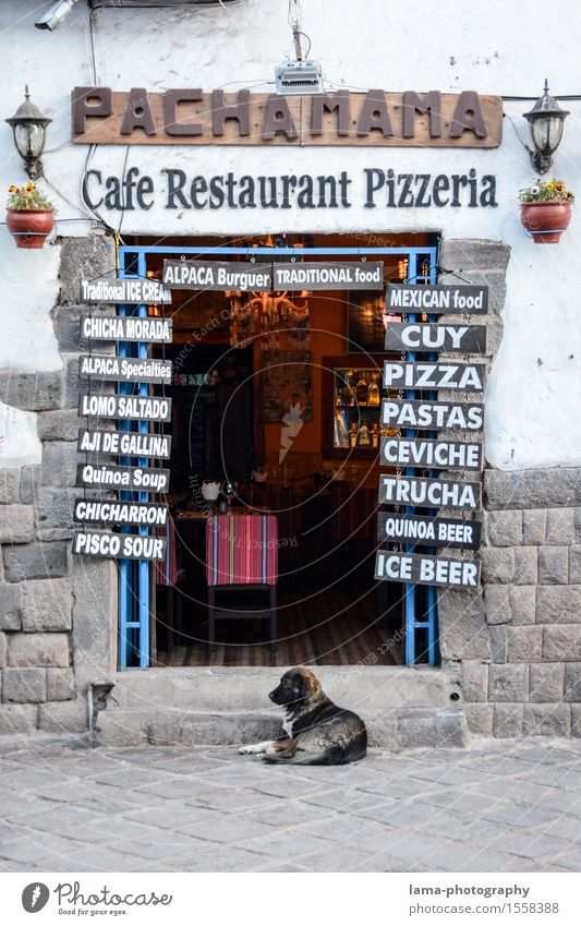 Pachamama Nutrition Italian Food pizzeria Tourism Cuzco Peru South America Restaurant Gastronomy Wall (barrier) Wall (building) Door Dog Entrance Front door