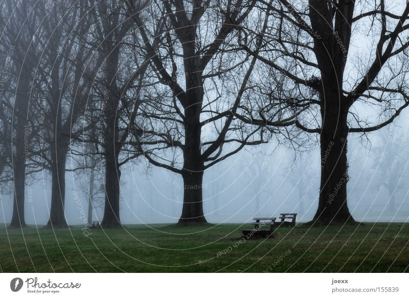 Nature Tree Calm Loneliness Dark Garden Sadness Park Fog Bench Crisis