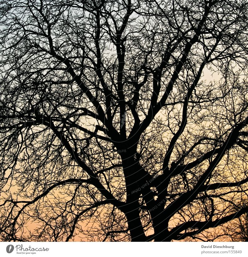branch network Branch Tree Sunset Evening Sky Colour Dye Tree trunk Shadow Network Orange Blue Winter