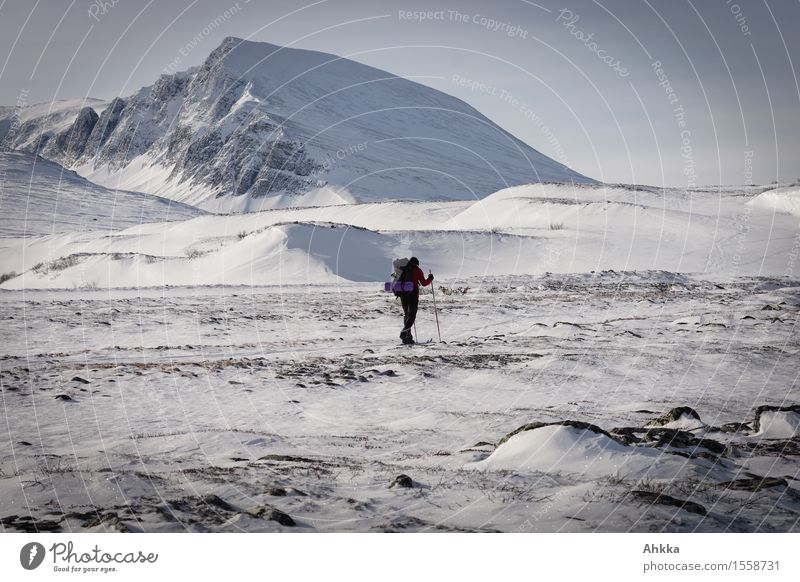 Ski hikers in the wintery mountain landscape of Norway Winter sports Skiing 1 Human being Landscape Snow Mountain Snowcapped peak Adventure Loneliness