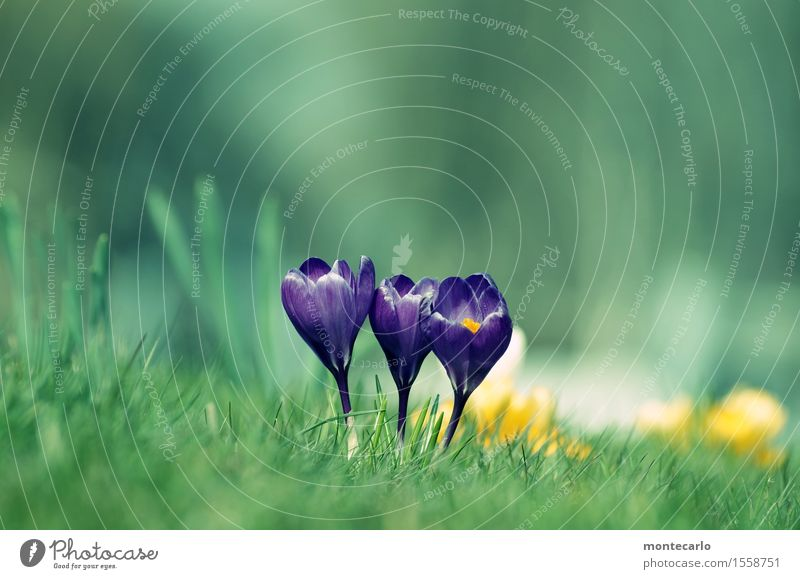 jump... Environment Nature Plant Air Spring Climate Beautiful weather Grass Leaf Blossom Foliage plant Wild plant Crocus Meadow Thin Authentic Friendliness