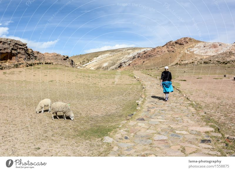 Isla del Sol Vacation & Travel Tourism Trip Adventure Far-off places Hiking Young woman Youth (Young adults) 1 Human being Landscape Island Titicaca lake