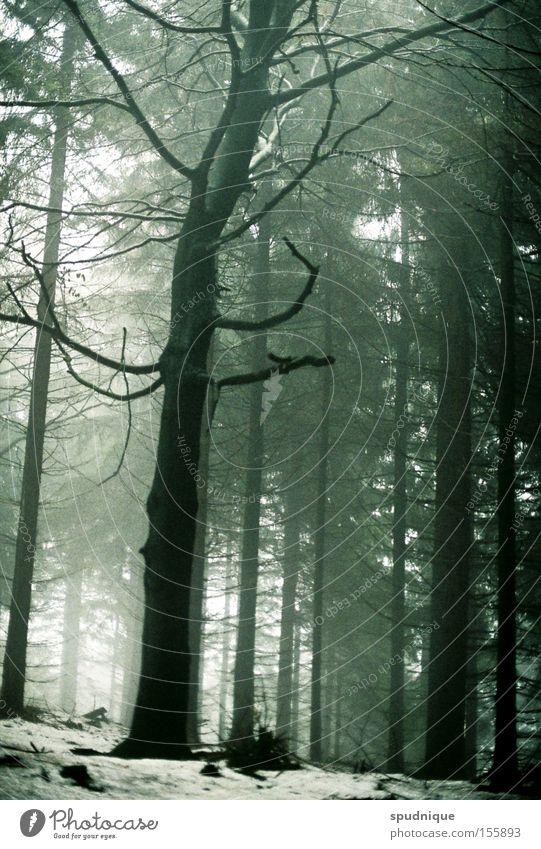 Tree Winter Loneliness Forest Dark Death Gray Fog Grief Branch Transience Distress Bleak Branchage Diffuse