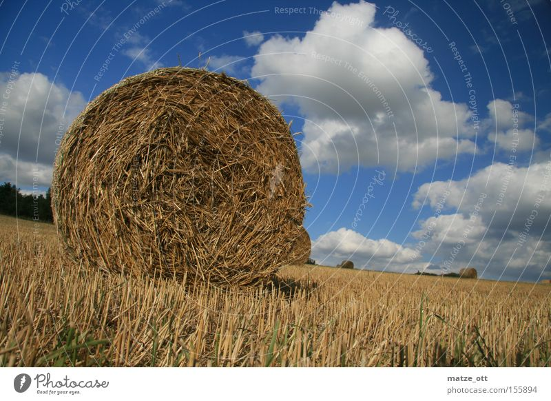 straw bale Straw Bale of straw Autumn Sky Clouds Summer Nature Hay August Upper Franconia Bavaria Field Agriculture Grain