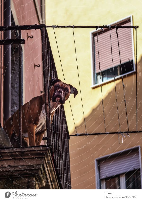 Dog Vacation & Travel House (Residential Structure) Animal Window Yellow Wall (building) Architecture Building Wall (barrier) Brown Facade Tourism Wait Trip