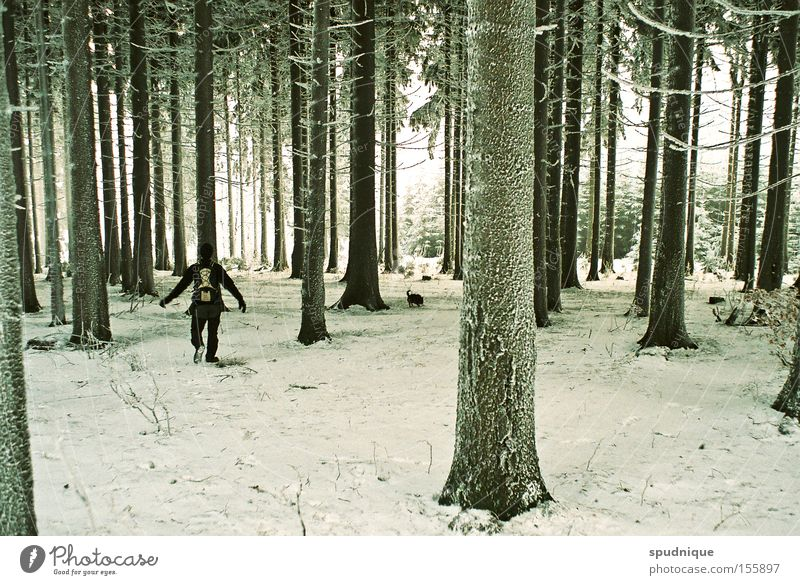 so quiet. Forest Tree Spruce Snow Hoar frost Ice Cold Winter Winter forest Hiking Branch Freeze Calm Peace Beautiful