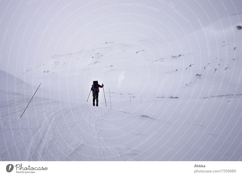 Once Arctic Adventure Far-off places Winter vacation Winter sports Skiing 1 Human being Nature Landscape Clouds Bad weather Gale Fog Ice Frost Snow Mountain