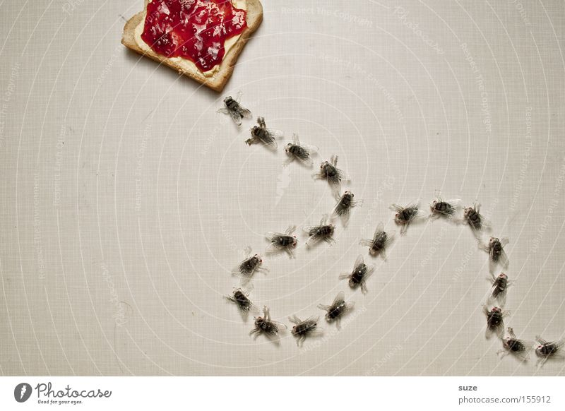 Funny Food Fly Nutrition Decoration Sweet Creativity Idea Plastic Insect Breakfast Delicious Bread Organic produce Fasting Bite