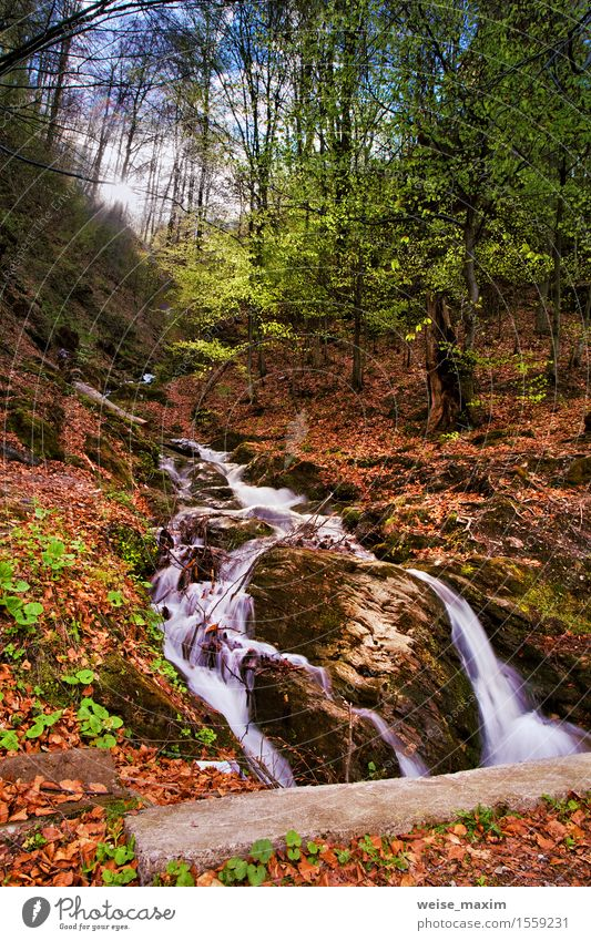 Spring waterfall and forest stream in mountains Vacation & Travel Sun Nature Landscape Plant Elements Earth Water Sky Sunrise Sunset Climate Beautiful weather