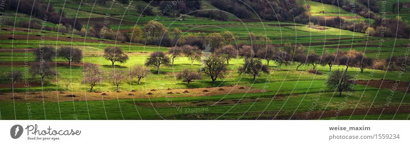 apple orchard on the hills in early spring Nature Vacation & Travel Plant Green Tree Landscape Forest Mountain Spring Meadow Natural Grass Garden Bushes