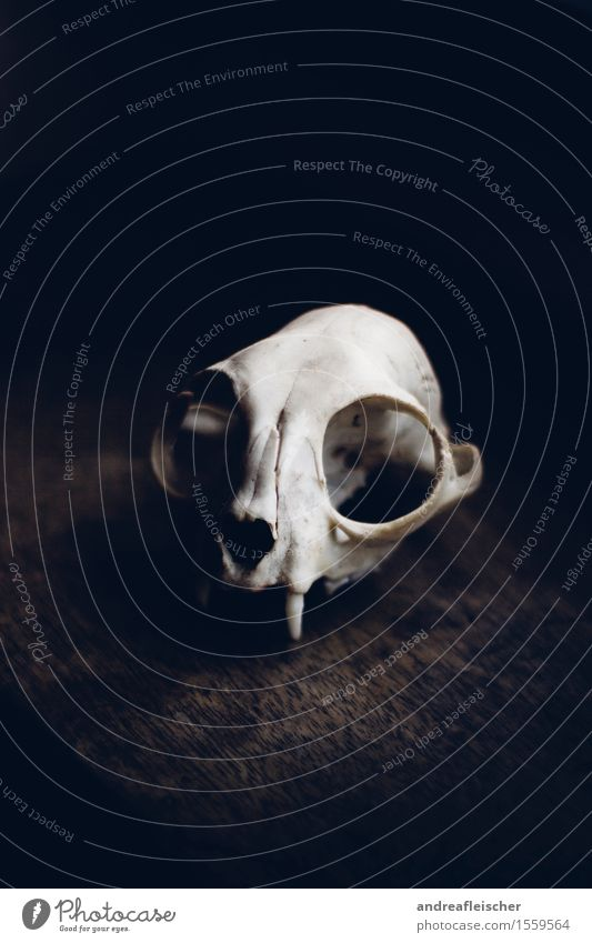 Death as an Aesthete Animal Sadness Concern Grief Appetite Pain Longing Loneliness Exhaustion Fear Popular belief Animal skull Esthetic Marten Find Dark Threat