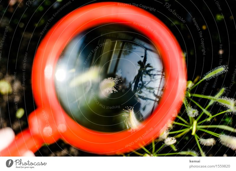 magnified view Nature Plant Foliage plant Exotic Carnivorous plants Magnifying glass Glass Glittering Round Green Red Enlarged Investigate Fine Delicate Drop